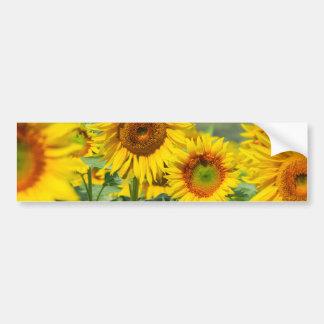 Bright sunflowers bumper sticker