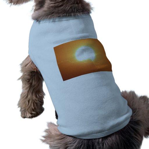 bright sunset pet clothes