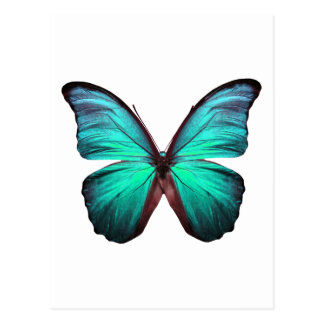 Bright Teal Butterfly Postcard