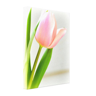 Bright Tulip Stretched Canvas Print