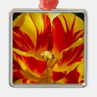 Bright tulip Silver-Colored square decoration