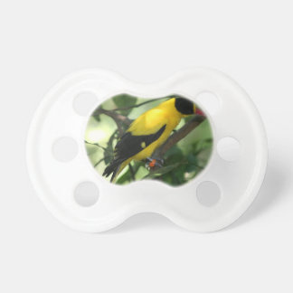 Bright yellow and black bird in tree pacifier
