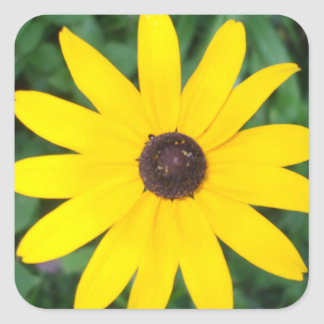 Bright Yellow Black Eyed Susan Square Sticker