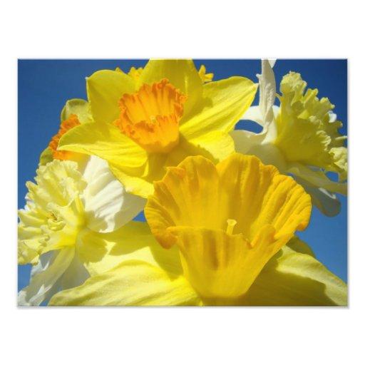 Bright Yellow Daffodil Flowers Photography prints Photo Art