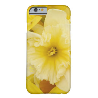 Bright Yellow Daffodils iPhone Case