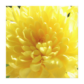 Bright Yellow Flower - Canvas Gallery Wrap Canvas