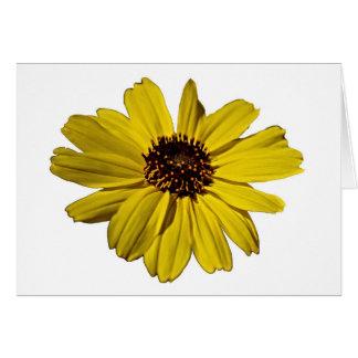 Bright Yellow Flower, Daisy Greeting Card