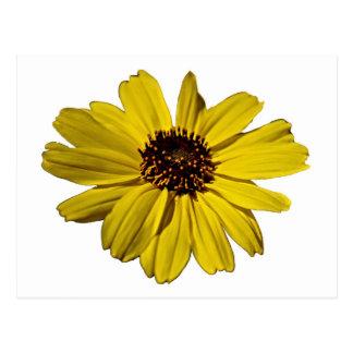 Bright Yellow Flower, Daisy Postcard