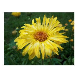Bright Yellow Flower Postcard
