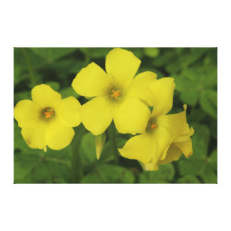 Bright Yellow Flowers Canvas Prints