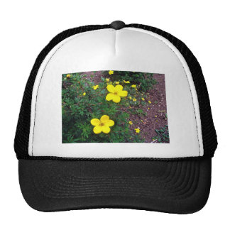 Bright yellow flowers trucker hats