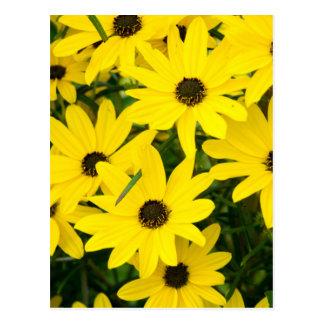 Bright Yellow Flowers Postcard