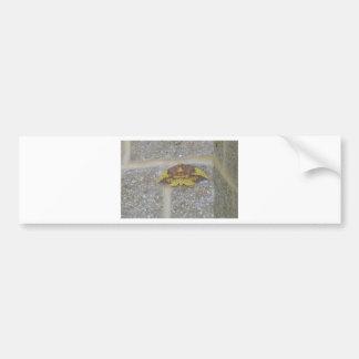 Bright Yellow Green & Brown Moth on Grey Brick Bumper Sticker