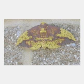 Bright Yellow Green & Brown Moth on Grey Brick Rectangular Sticker