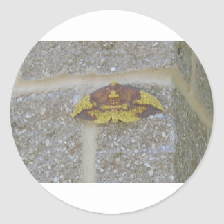 Bright Yellow Green & Brown Moth on Grey Brick Round Stickers