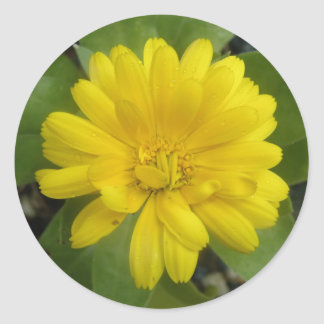 Bright Yellow Marigold Stickers