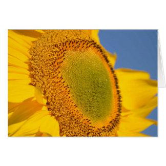 Bright Yellow Sunflower Greeting Card