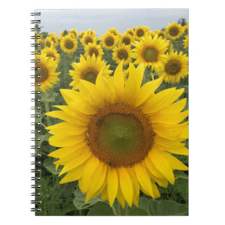 Bright Yellow Sunflowers Photo Notebook