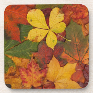Brightly Colored Fall Leaves Coaster
