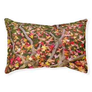 Brightly Colorful Maple Leaf