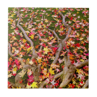 Brightly Colorful Maple Leaves Tile