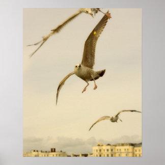 Brighton, England 2 Poster
