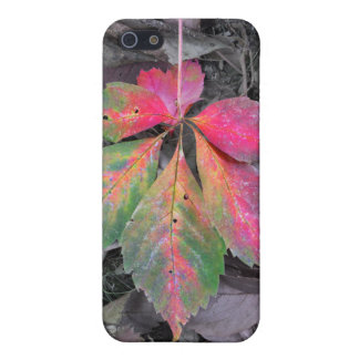Brilliance Among the Grey - Autumn Leaf iPhone 5 Cover