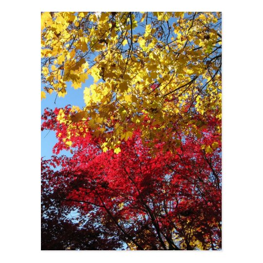Brilliant Autumn Trees Postcard