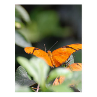 Brilliant Orange Butterfly Post Cards