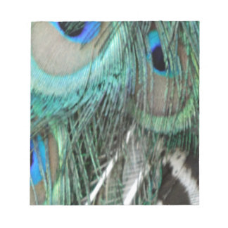 brilliant peacock feathers notepad