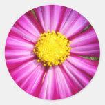 Brilliant Pink Cosmo Round Sticker