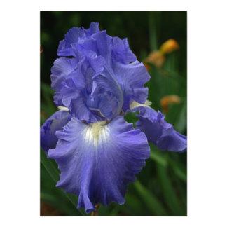 Brilliant Purple Iris Flower Photo Art