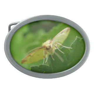 Brimstone Moth Belt Buckle