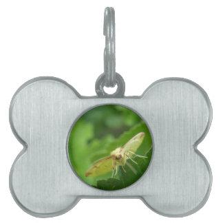 Brimstone Moth Pet Tag