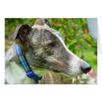 Brindle and white greyhound (a346) card