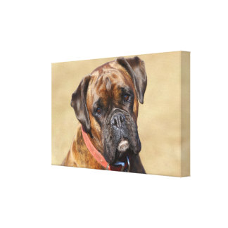 Brindle Boxer Dog Canvas Print