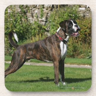 Brindle Boxer Dog Show Stance Coaster