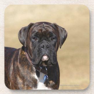 Brindle Boxer Dog Standing Drink Coaster