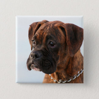 Brindle boxer puppy button