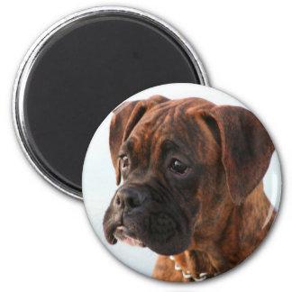 Brindle boxer puppy magnet