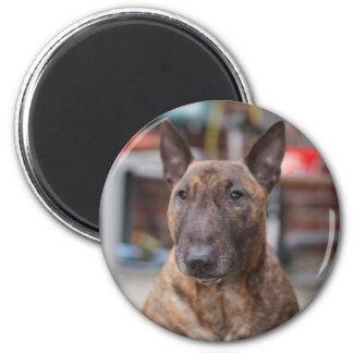 Brindle English Bull Terrier Magnet