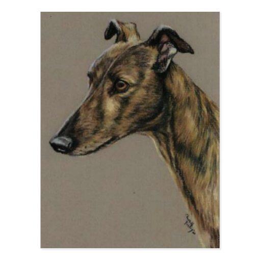 """""""Brindle Greyhound"""" Dog Art Postcard"""