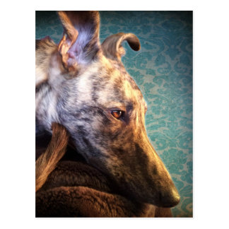 Brindled Lurcher Greyhound Cross Postcard