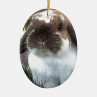 Bring some furriness into your life! christmas ornament