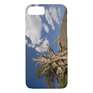 Bristlecone pine in Ancient Bristlecone Forest, iPhone 8/7 Case