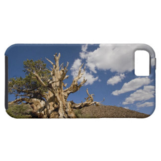 Bristlecone pine in Ancient Bristlecone Forest, Tough iPhone 5 Case