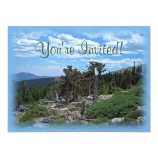 "Bristlecone Pine Tree Mount Evans Colorado 6.5"" X 8.75"" Invitation Card"
