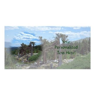 Bristlecone Pine Tree Customized Photo Card