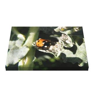 British 7 Spot Ladybug Canvas Print