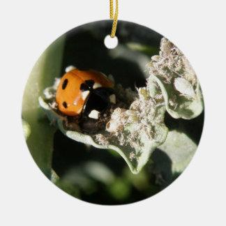 British 7 Spot Ladybug Custom Birthday Christmas Ornament